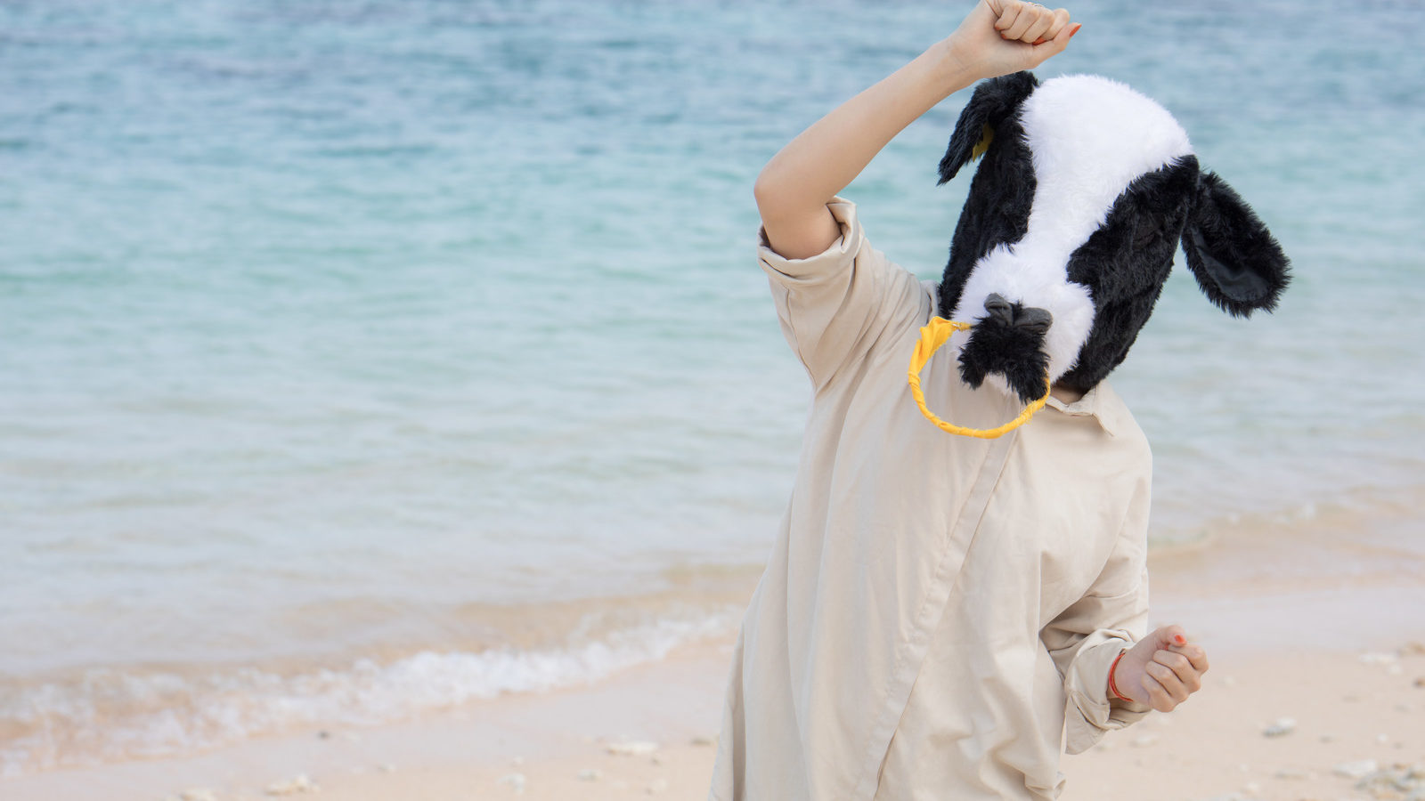 海の上の牛さん